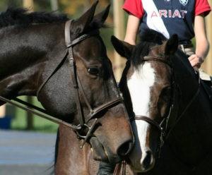 horsesC2